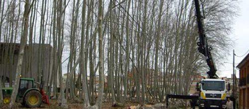explotacio-forestal-2